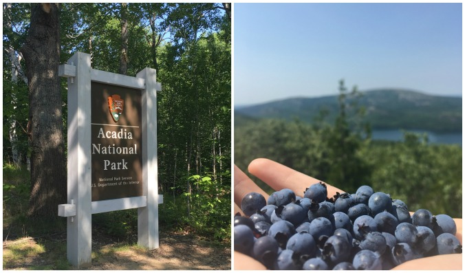 acadiablueberries